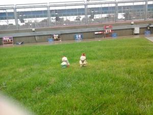 Gnomes in Silverstone Pit Lane